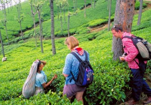 Tea Estate and plantation visits