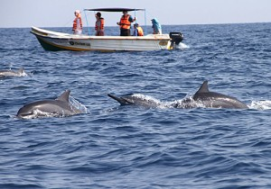Whale Watching and Dolphin Watching